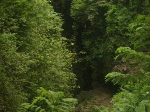 Gb. Goa Tempat Masuknya Air Sungai Kali Suci Dilihat Dari Atas