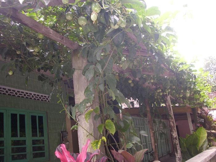 memanfaatkan pekarangan rumah yang sempit dengan tanman