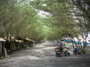 Gb.Jalan pasir memanjang sekirar 1 km di tepi pantai dengan pohon Cemara laut jenis Udang