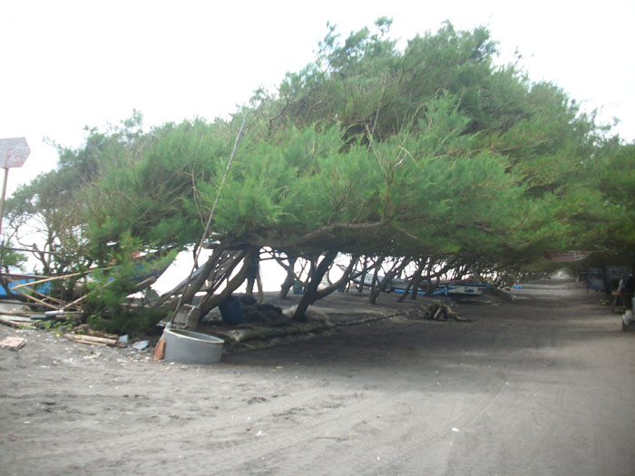 Foto-Foto Pantai Kuwaru Srandakan Bantul Yogyakarta ...