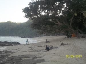 Gb.Pohon yang rindang di pinggr pantai bisa kita paka untuk berteduh atau mendirikan tenda