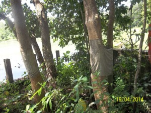 Gb. Hutan yang masih rindang di sekitar telaga
